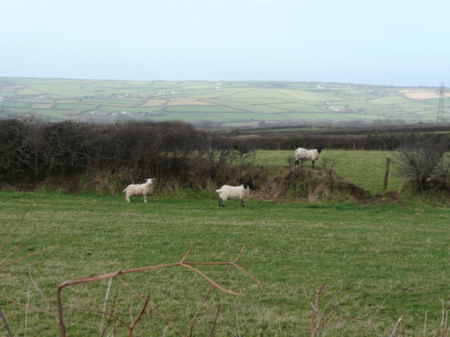 Sheep pasture west of the B3266