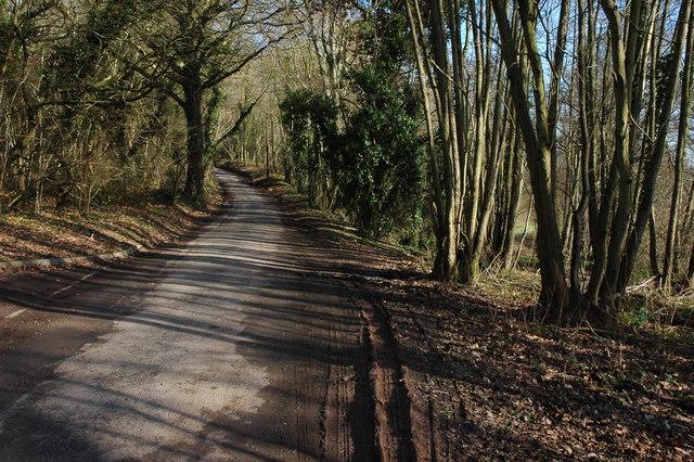 Road through Big Wood