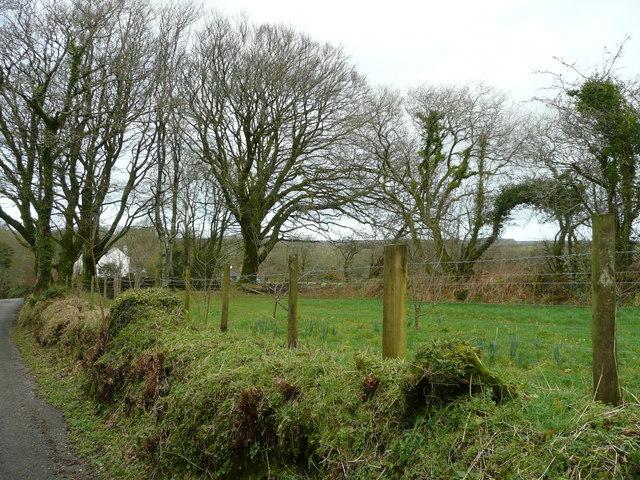 Field near Little Parkwalls