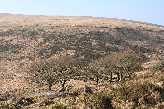 Dartmoor Forest: edge of Wistman's Wood