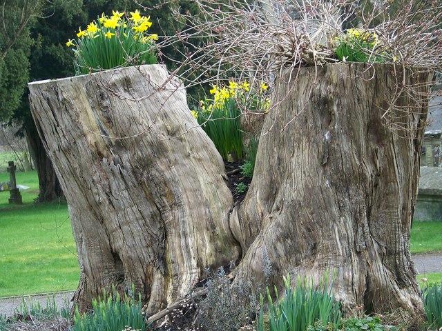 Natural Flowerpots