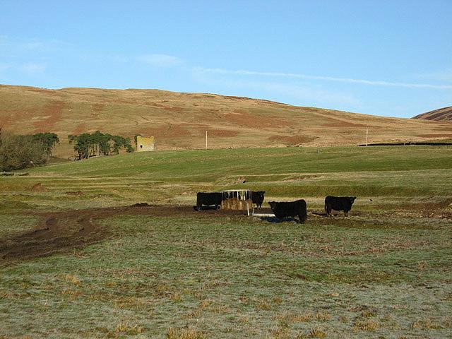 Livestock field at Dryhope