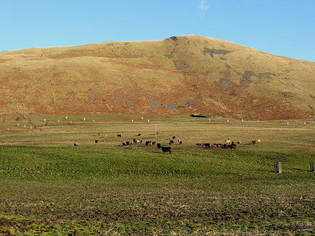 Livestock farmland