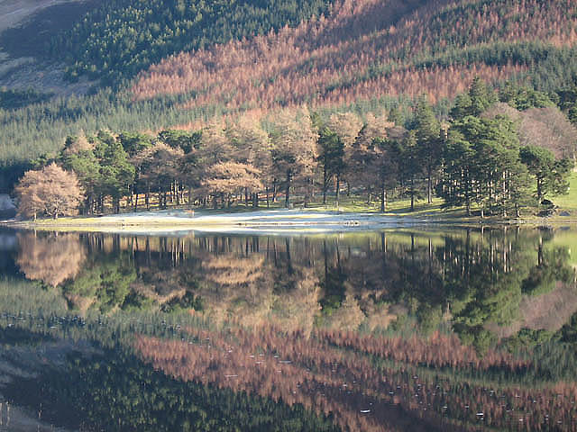March Wood reflected in St Mary's Loch