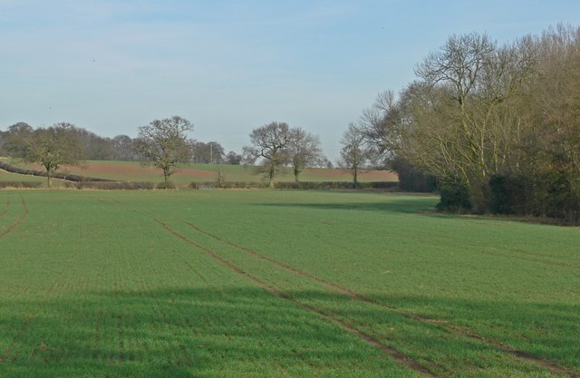Farmland north of Orton Wood