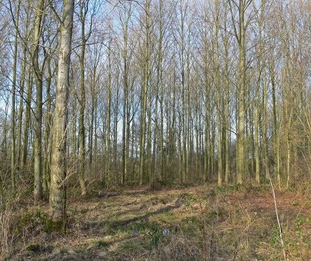 Orton Wood near Twycross, Leicestershire