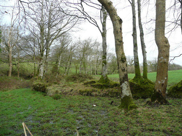Trees and wet ground near Tregoodwell