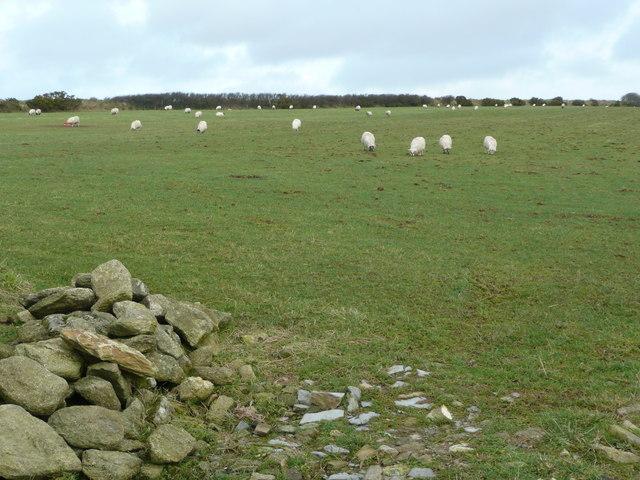 Sheep pasture near Starapark