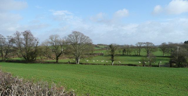Pastoral scene near Burracott