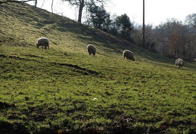 Sheep near the Batt's Brook