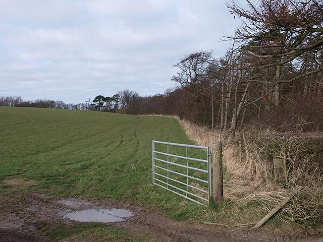 Woodland off Goldsborough Lane