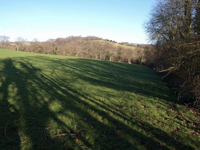 Field beside Morley's Brake