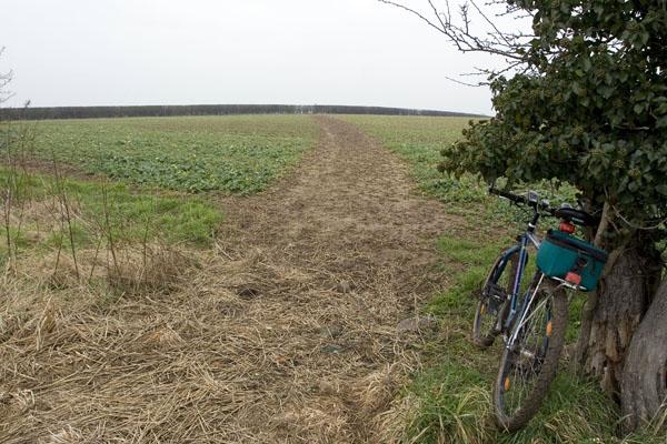 Footpath through field