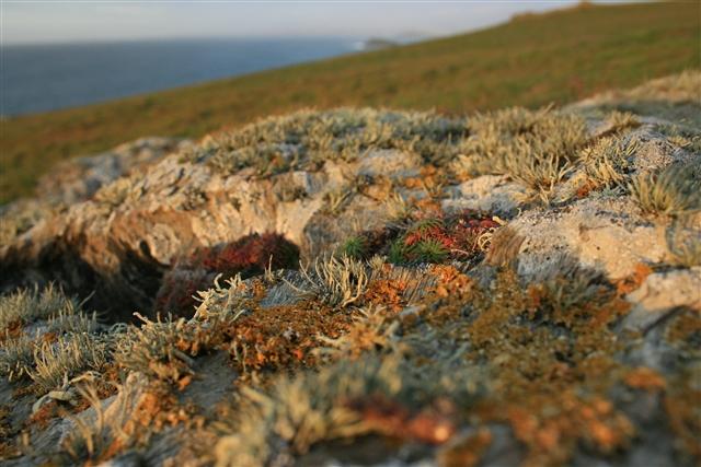 Lichen, Kelsey Head