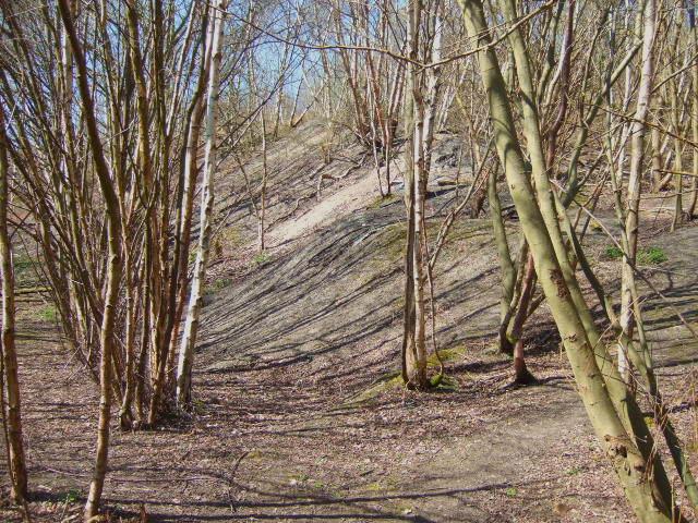 Overgrown  spoil heaps