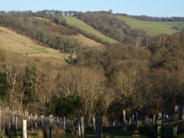 Gulley Wood and the upper Batt's Brook valley