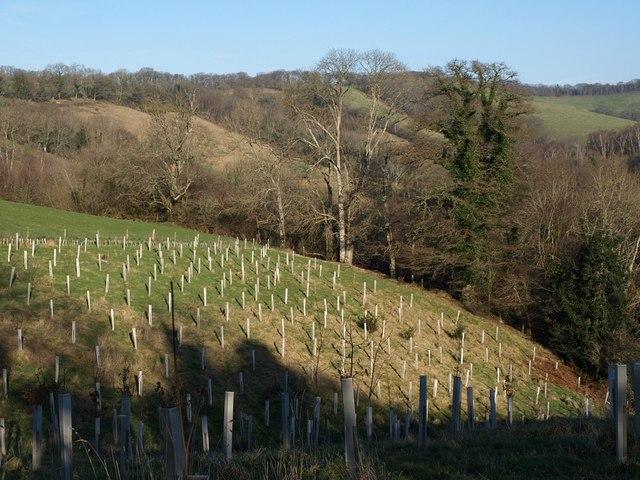 Gulley Wood