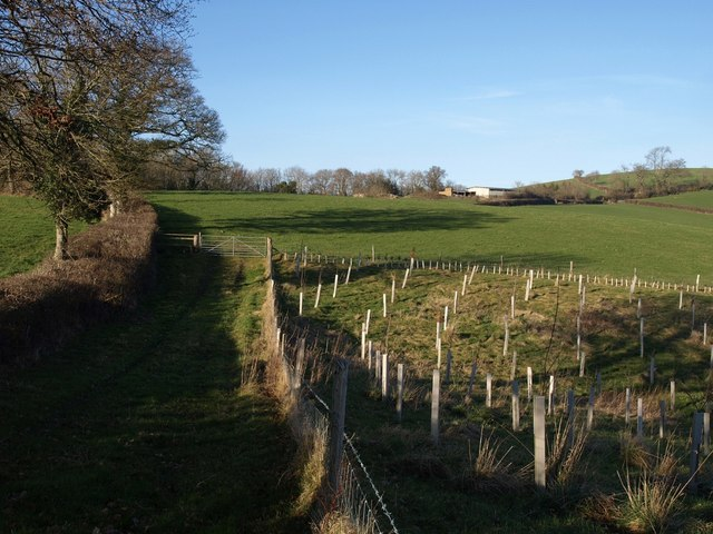 Track beside Gulley Wood