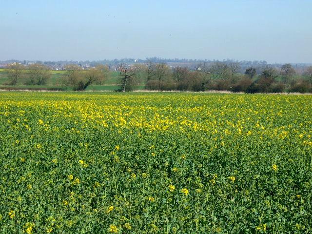 Looking to Barns Heath