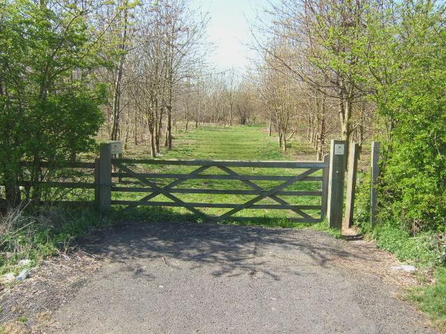 Amenity woodland