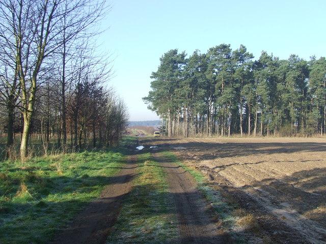 Farm track with fields