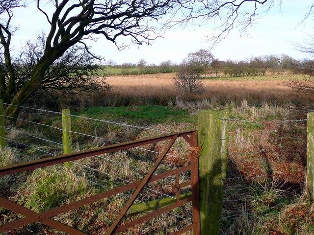 Rough pasture near Parkhead
