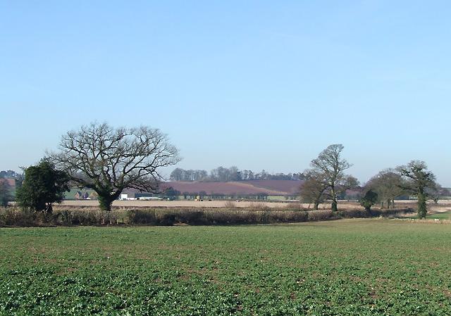 Crop Fields near Upper Aston, Shropshire