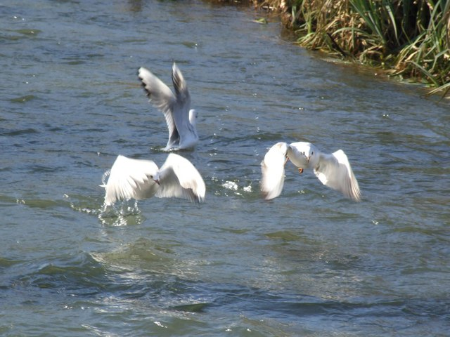 The River Bain, Horncastle