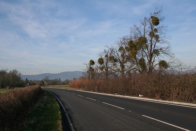 Mistletoe Spheres