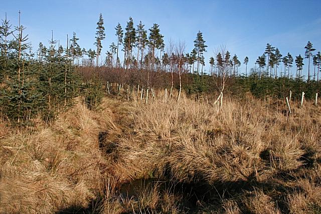 Tarryblake Wood