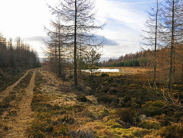 Forestry track and lochan near Barr Dubh