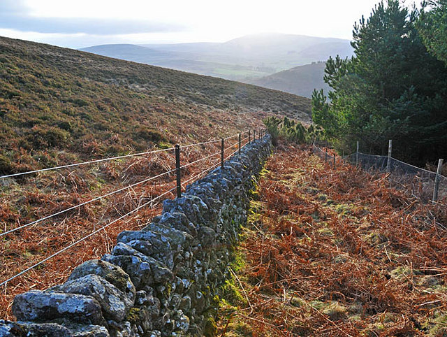 Boundary dyke and fence at the edge of the wood