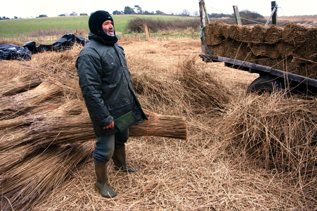 Reed Cutter