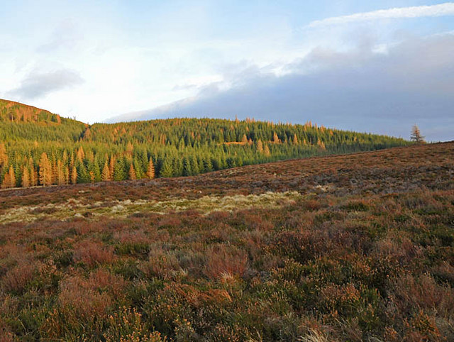 Moorland with Torlum wood beyond