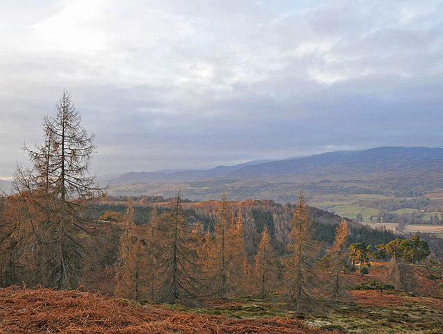 Larches and scots pines on the south side of Torlum Hill