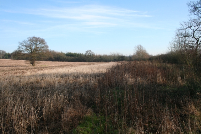 Wide Field Margins