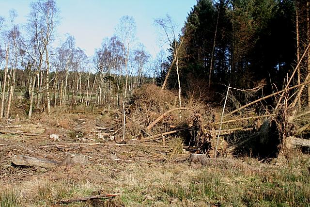 Retanach Wood