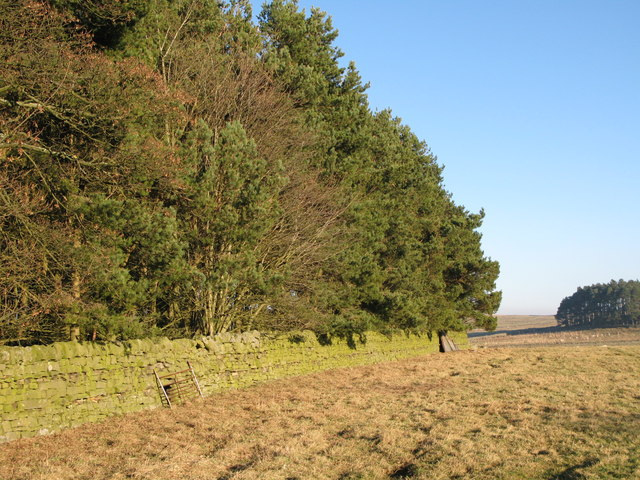 Plantation above Housty
