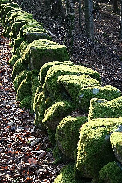 Moss-covered Dyke