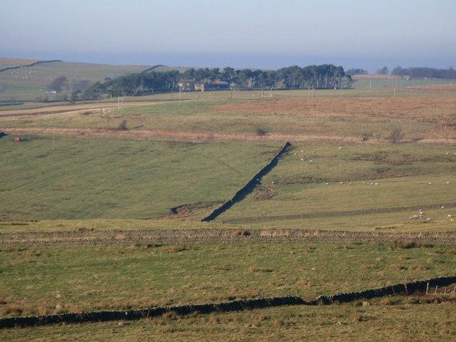Pastures above Stone Stile (3)