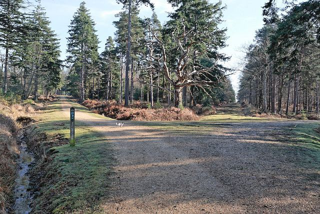 Four way track junction in Highland Water inclosure