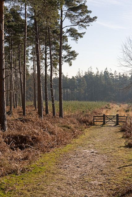 Approaching replanted area in Highland Water inclosure