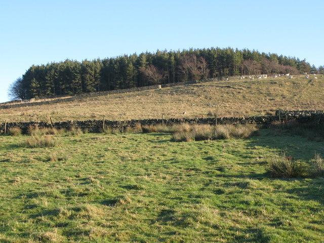 Rough pastures above Stone Stile (3)