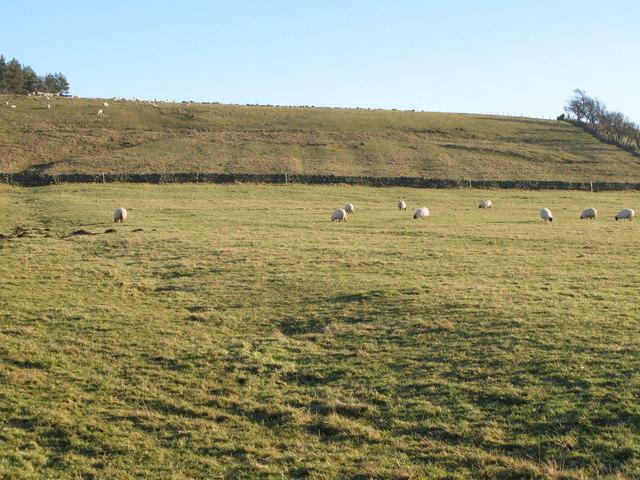 Rough pastures above Stone Stile (4)
