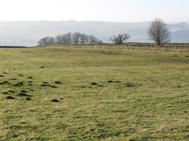 Pastures near Stone Stile