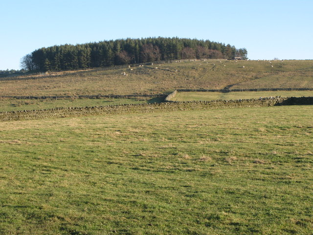 Rough pastures above Stone Stile (5)