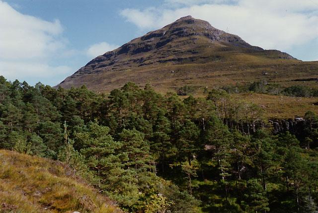 Pine woods by the Abhainn Coire Mhic Nòbuil