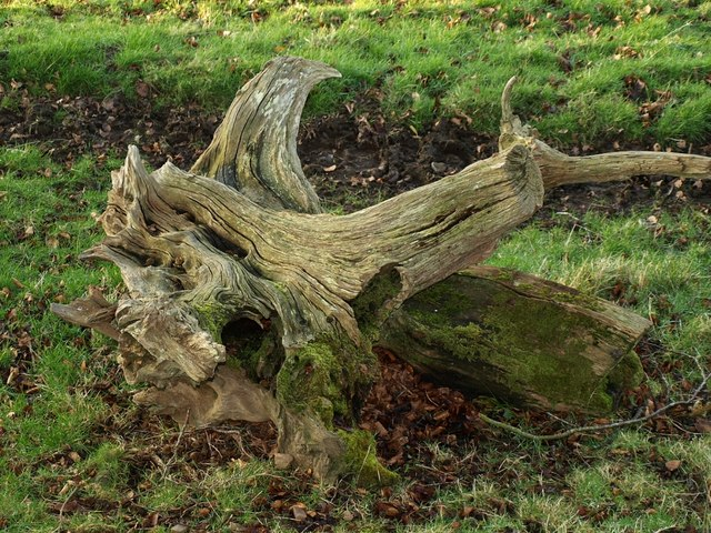 Dead tree by the bridleway