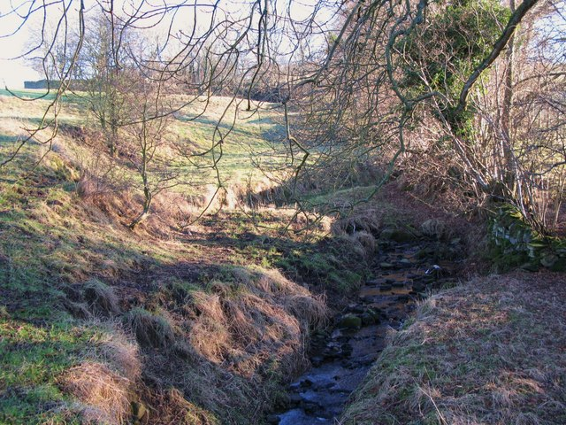 Tributary of Catton Burn (2)