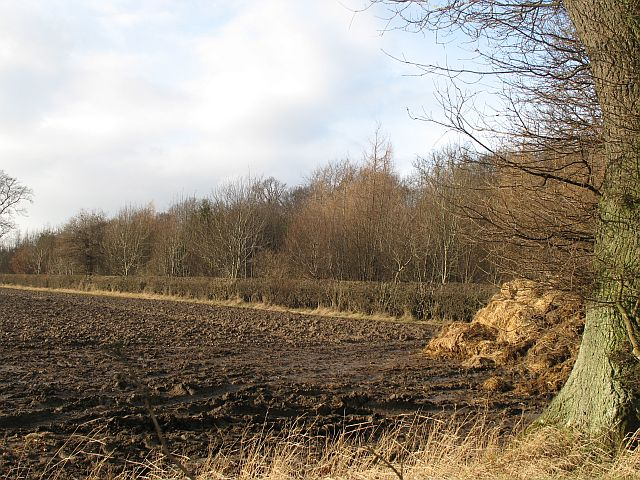 Ploughed field, Forgandenny